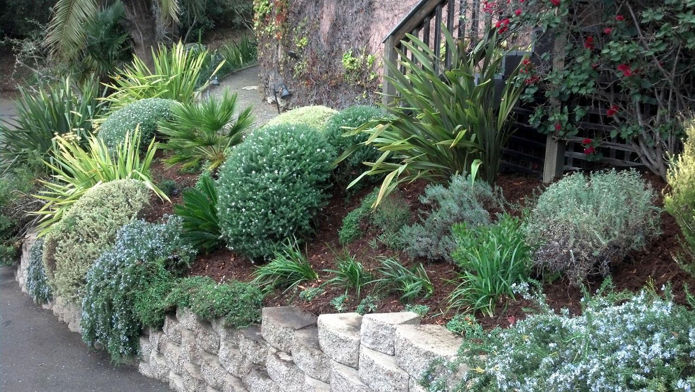 Kristina plants
